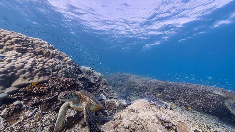 13. La gran Barrera de Coral